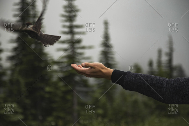 Cropped hand of man reaching towards bird flying in forest