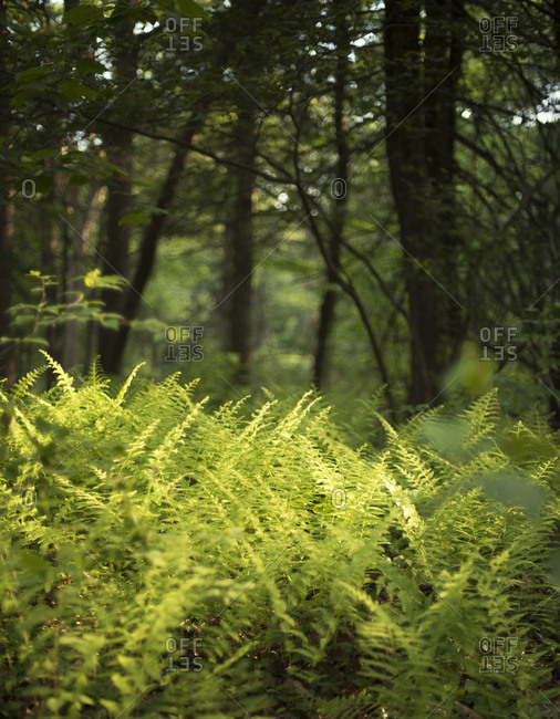 Plants and trees growing in forest
