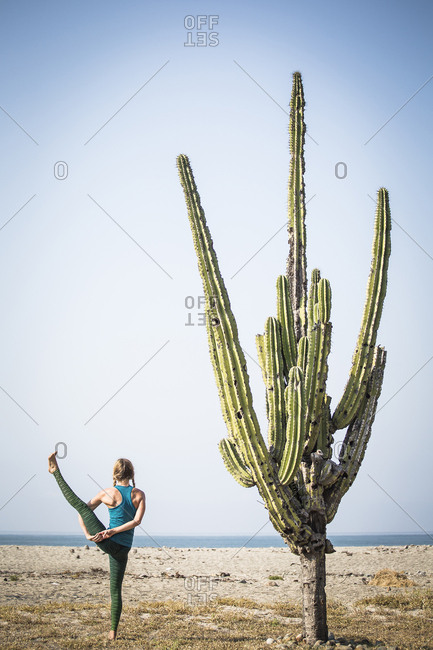 Rear view of woman doing bird of paradise yoga while standing by cactus at beach against clear sky