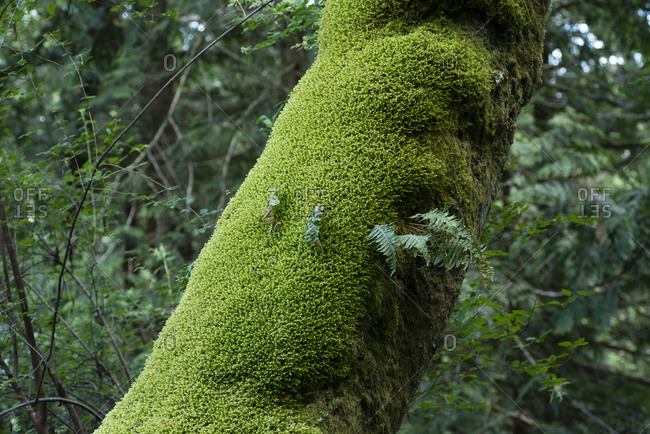 Moss covered tree trunk in forest