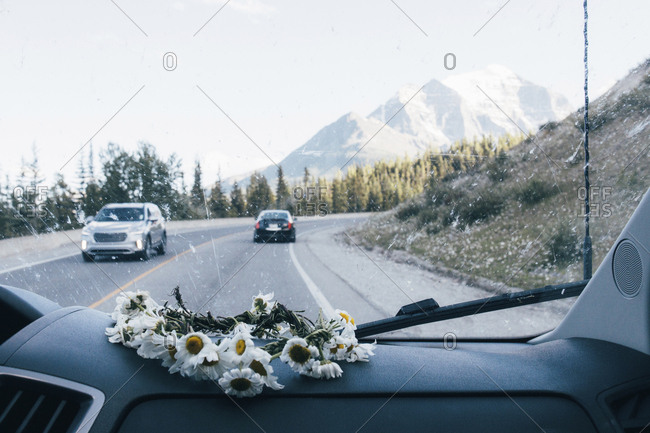 Daisies on dashboard of car