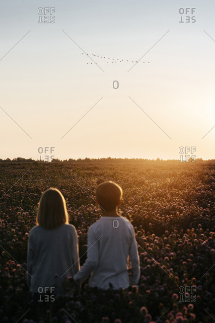 Two kids standing on a clover field watching birds in the sunset