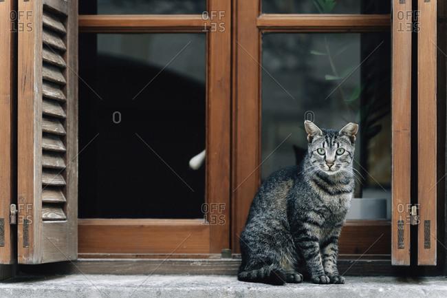 Portrait of tabby cat sitting on window sill