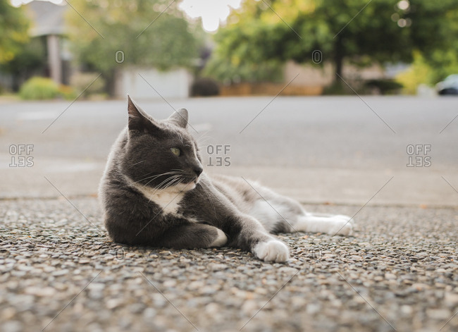 Cat looking away while relaxing on footpath