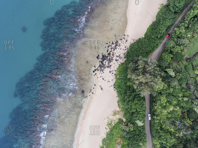 Overhead view of trees at beach by road