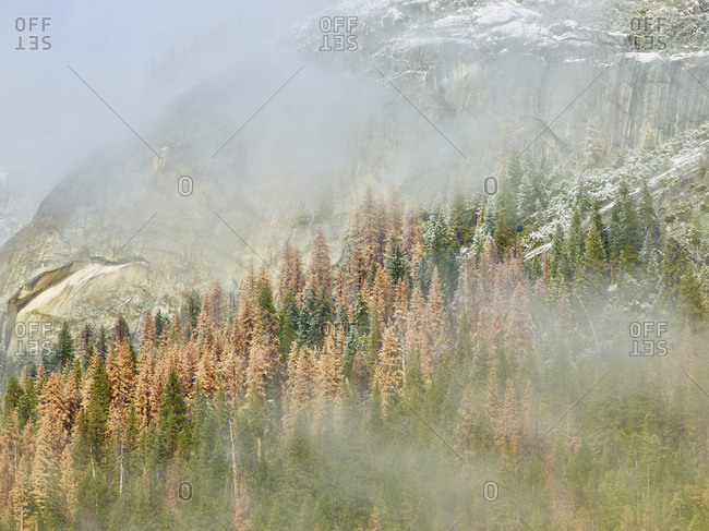 Scenic view of trees and mountains at Yosemite National Park during foggy weather