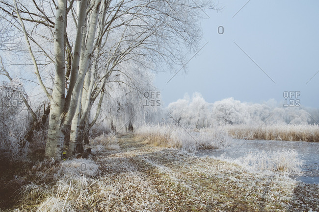 Scenic view of snow covered trees by lake during winter