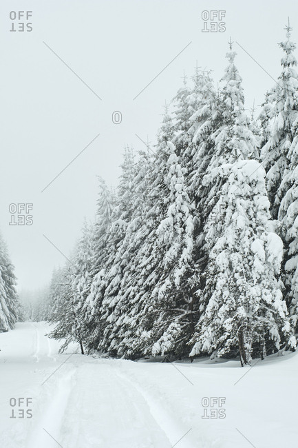 Snow covered coniferous trees on field against sky during winter