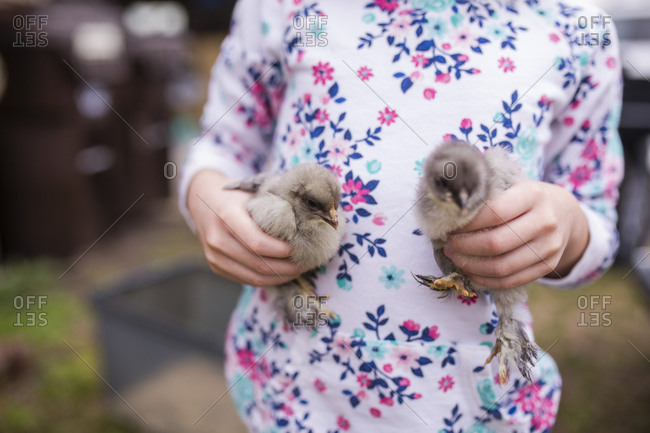 Midsection of girl holding baby chickens while standing on field