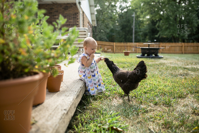 Baby girl eating bread while feeding hen at yard