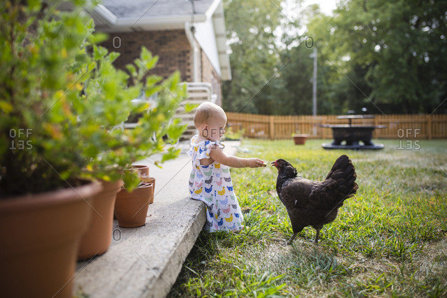 Baby girl feeding bread to hen while sitting on porch at yard