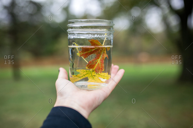 Cropped hand of boy holding maple leaves in water filled jar at backyard