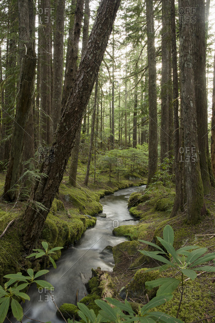 Stream flowing through forest at Mt Hood National Forest