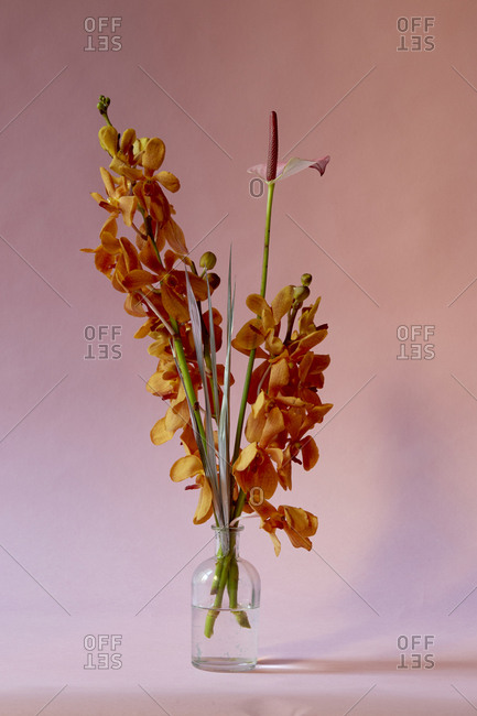 Close-up of flowers in vase against pink background
