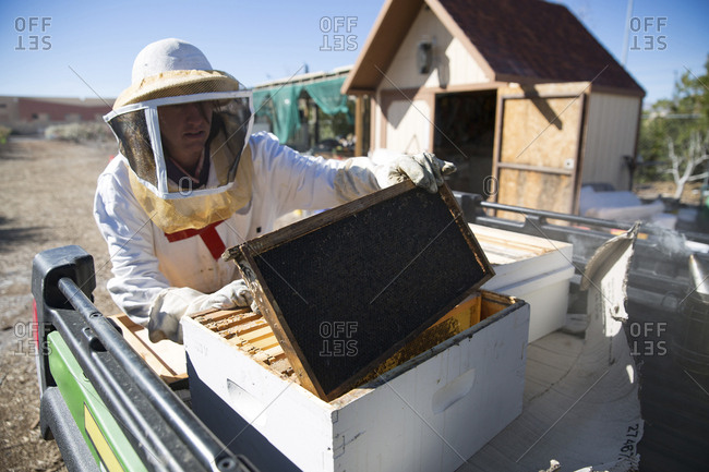 Beekeeper inspecting beehive on pick-up truck