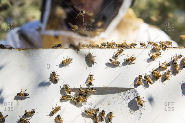 Close-up of beekeeper standing by beehive box