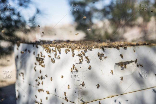 Close-up of bees on container in farm
