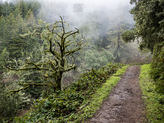 Green forest trail ascending into mist