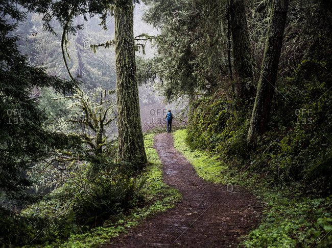 Lush forest trail leading to solo person in the distance