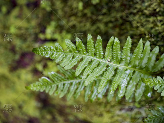 Detail of lush green fern with shallow depth of field