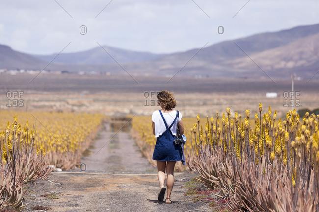 Pretty girl with sunglasses walking in aloe vera field, Fuerteventura