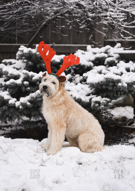 Dog sitting outdoors in the snow wearing colorful reindeer antlers.