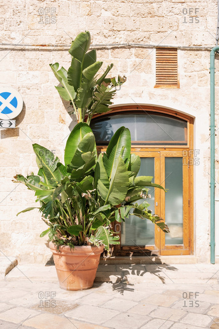 Potted Plant in Italian Village