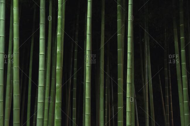 Bamboos Stock Photos Offset