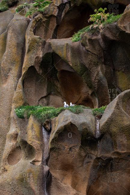 Bird's nest on a mossy cliff