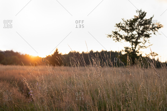Sunset behind trees at the edge of a field