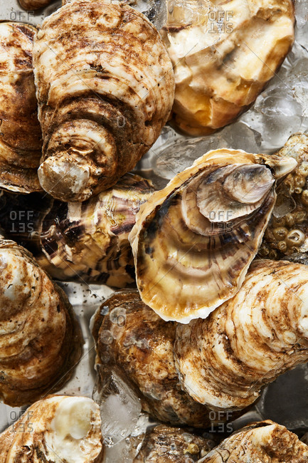 Close up of oysters in shells on ice