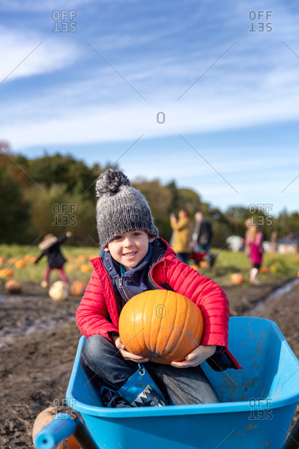 Small boy sits in the wheelbarrow with a pumpkin from the batch