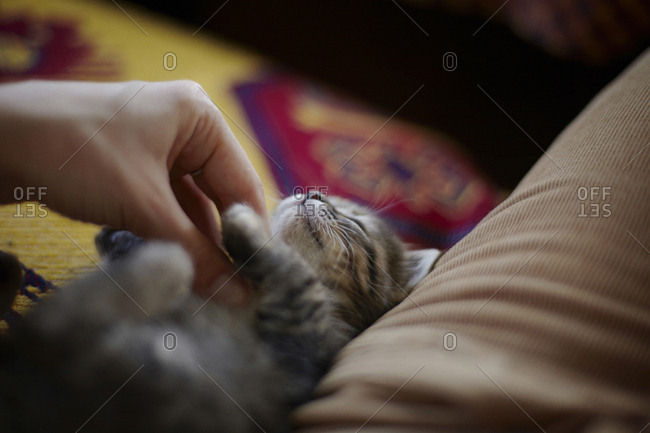 Cropped hand of woman petting cat lying on sofa