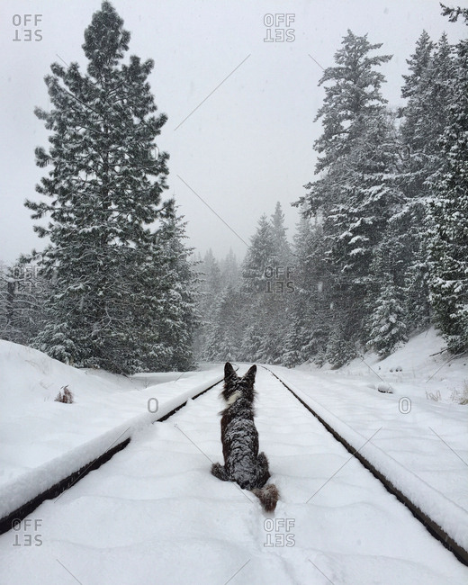 Rear view of dog sitting on snow covered railroad track