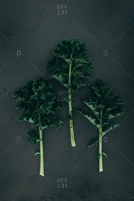 Curly Kale against a black background