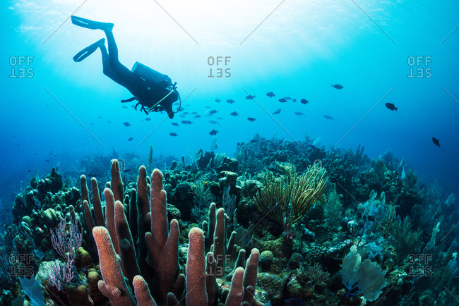Scuba diver diving amongst fish and corals in Utila, Honduras