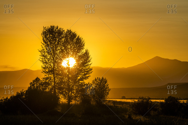Silhouettes of trees at sunset in Picabo, Idaho, USA