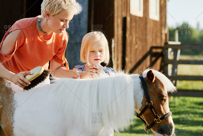 Excited blond-haired little girl and her mother carefully brushing mane of cute miniature horse on farm