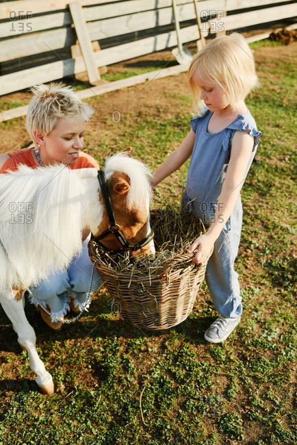 Pretty little blond-haired girl holding basket with hay and watching at cute pony eating, her mom sitting beside and smiling