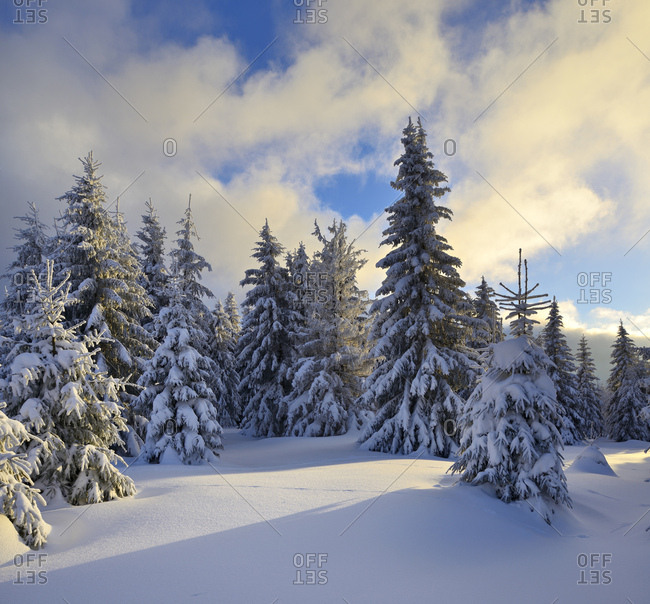 Germany, saxony-anhalt, harz national park, close schierke, spruces with snow, evening light, deeply snow-covered scenery in winter,