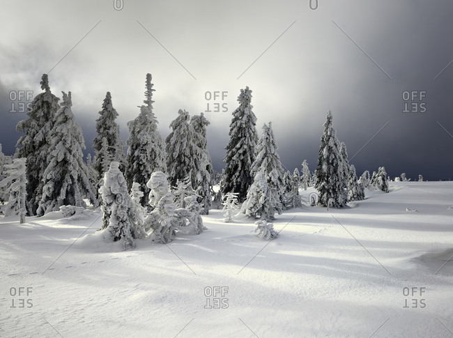 Germany, saxony-anhalt, harz national park, spruces with snow, deeply snow-covered scenery in winter, approaching clouds, wilderness