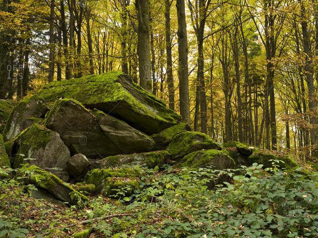 Germany, hessia, hessian Rhon nature reserve, unesco biosphere reserve, rock formation in the buchenwald close poppenhausen, autumn
