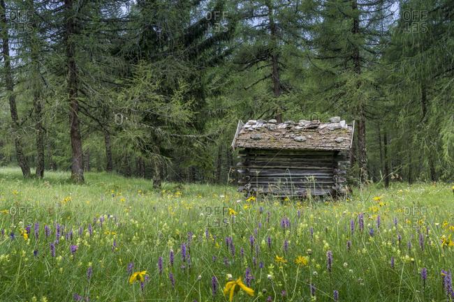 Austria, tyrol, the stubai alps, neustift, heustadl in the eulenwiese in summer