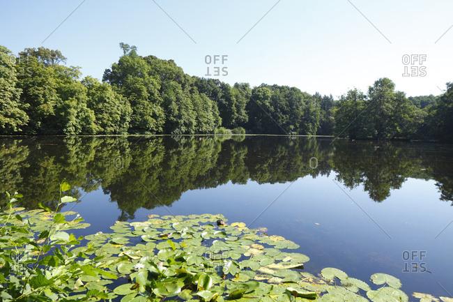 Backhausteich (pond), darmstadt-kranichstein, darmstadt, hessia, germany, europe