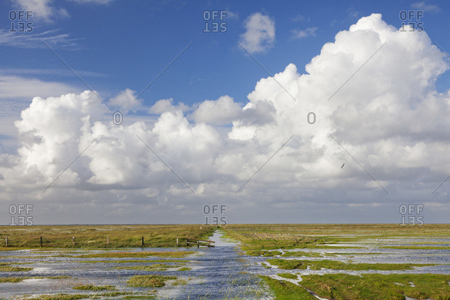 Salt meadows, westerhever, peninsula eiderstedt, schleswig holstein, germany