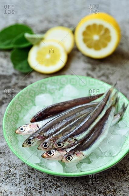 Bowl of fresh european anchovies on ice