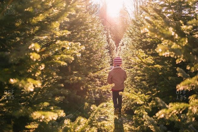 Boy walking between two rows of trees at a Christmas tree farm, United States