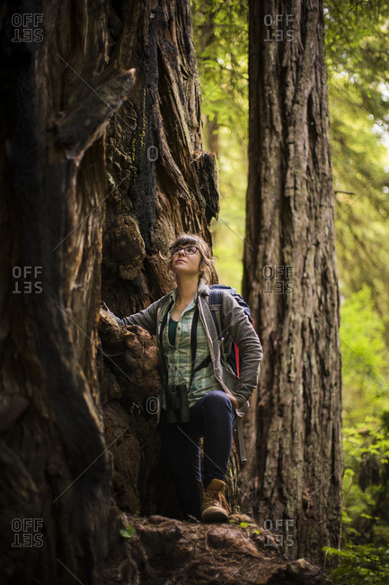 Female hiker looking up while standing by tree at Redwood National and State Parks