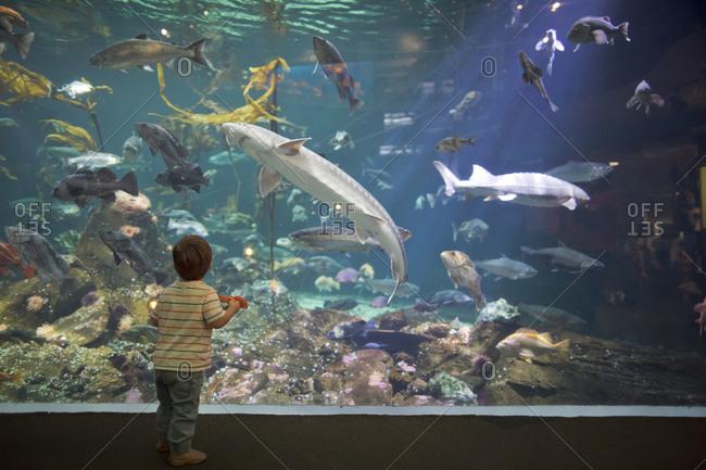 Boy looking upward at coral, sharks and fish in a large aquarium tank