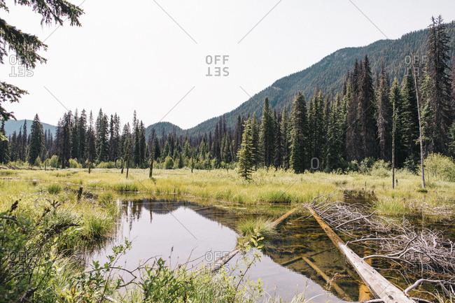 Beaver Pond, E.C. Manning Provincial Park, British Columbia